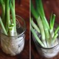 Nhà đẹp - Tự trồng hành lá, ăn hết lại có