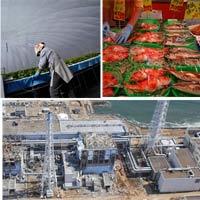 Sự sống kỳ diệu ở Fukushima 3 năm sau động đất