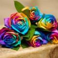 Nhà đẹp - Cách làm hoa hồng cầu vồng cực dễ
