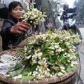 Tin tức - Hoa bưởi giá 250.000 đồng/kg hút khách Hà Nội
