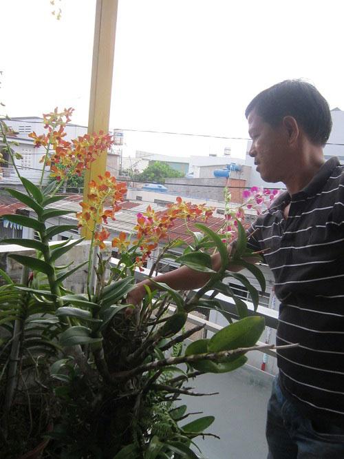 hang tram gio hoa nui rung khoe sac tham giua long tp.hcm - 9