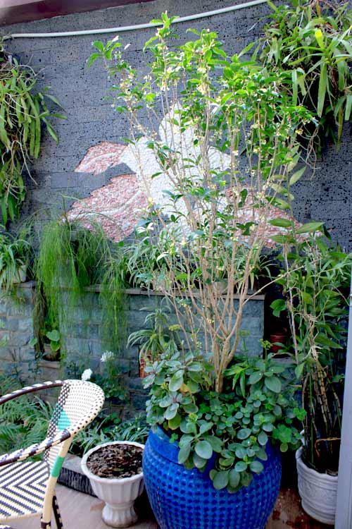 Cải tạo vườn sân thượng trong 3 tuần đẹp mê ly-4