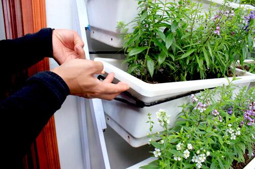 Cải tạo vườn sân thượng trong 3 tuần đẹp mê ly-13