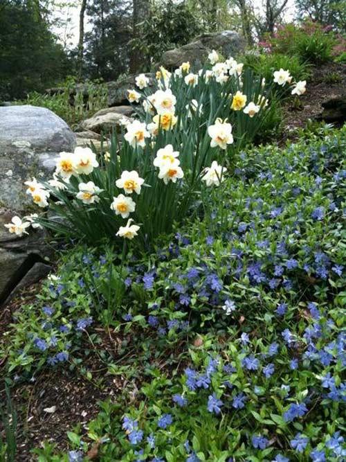 Vườn 4000m2 trăm hoa đua nở quanh năm ở New York-6