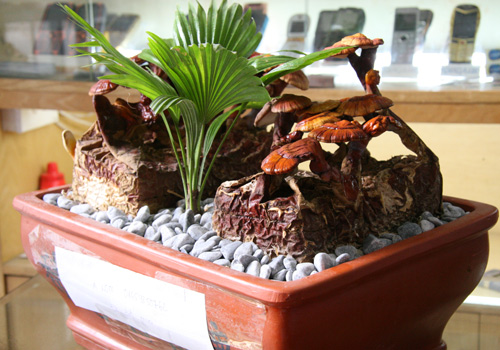 tet nay 'sot xinh xich' nam linh chi do bonsai - 4