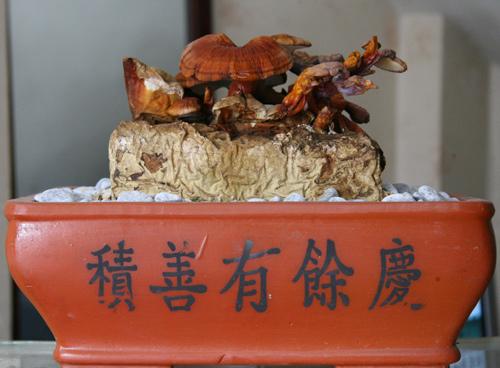 tet nay 'sot xinh xich' nam linh chi do bonsai - 5