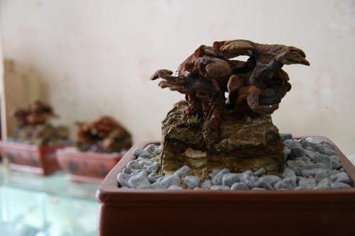tet nay 'sot xinh xich' nam linh chi do bonsai - 12