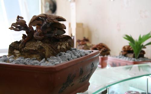 tet nay 'sot xinh xich' nam linh chi do bonsai - 13