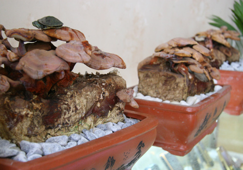 tet nay 'sot xinh xich' nam linh chi do bonsai - 6