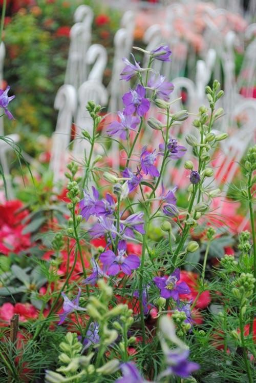 violet thuy chung bao xuan ve - 5