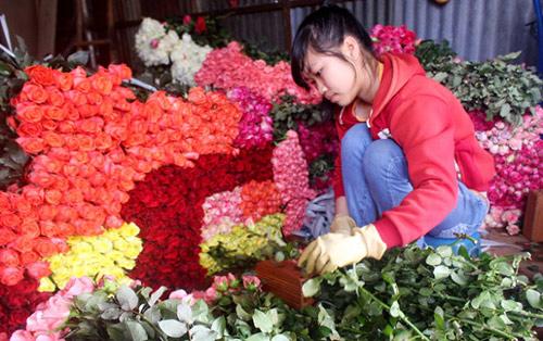 hoa hong da lat tang gia gap 5 lan truoc valentine - 4