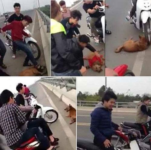 Dân mạng bức xúc với nhóm thanh niên đánh chó đến chết-1