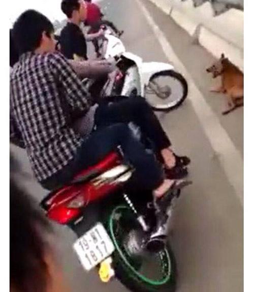 Dân mạng bức xúc với nhóm thanh niên đánh chó đến chết-3