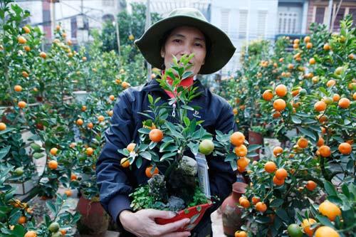 """diem mat"" nhung cay canh bonsai hut tien dip tet at mui - 3"