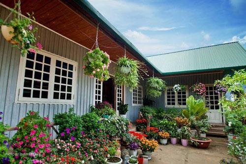 Vườn hồng đẹp như tranh của cô giáo Hà Giang-1