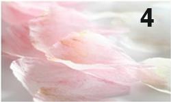 Hoa giấy nở bừng rực sắc ngày 8/3-4