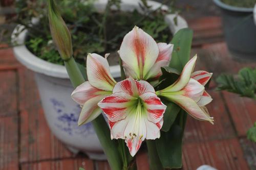 trong hoa lan hue thom ngat me ly - 15