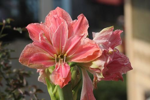 trong hoa lan hue thom ngat me ly - 6