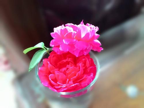 vuon hoa ban cong co gai nho trong tang me da khuat - 4