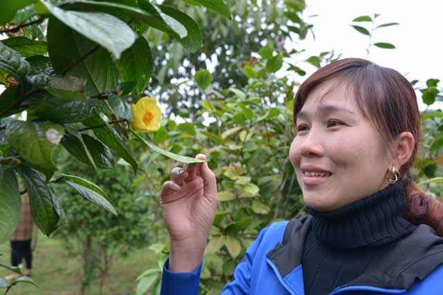 """ngam """"than duoc"""" dat do khoe sac tren huyen vung cao quang ninh - 4"""