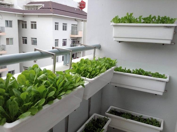Muôn kiểu trồng cây không cần vườn cho nhà nhỏ-5