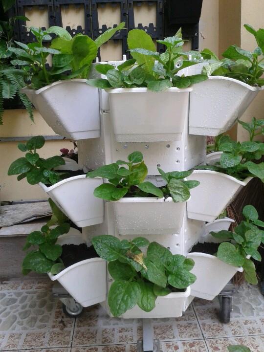 Muôn kiểu trồng cây không cần vườn cho nhà nhỏ-4