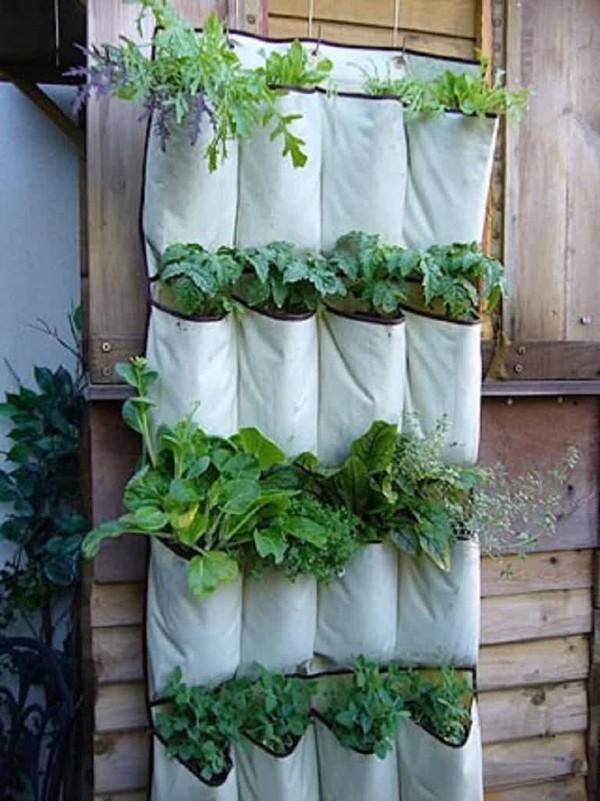 Muôn kiểu trồng cây không cần vườn cho nhà nhỏ-3