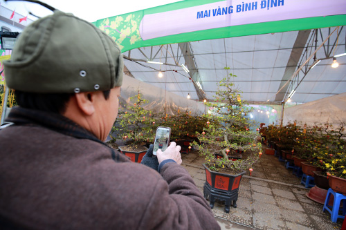 mai vang nam phong kin 'u' bong dien cho tet - 14