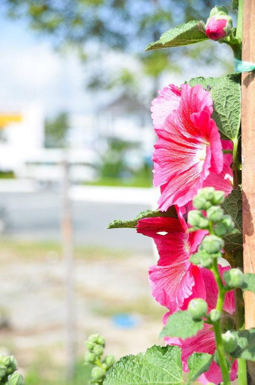 dà nãng: hoa tet khoe sác thám truoc gio ra thị truòng - 7