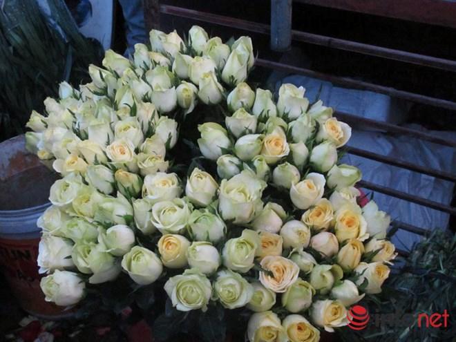 khan hiem, hoa hong valentine tang gia manh - 2