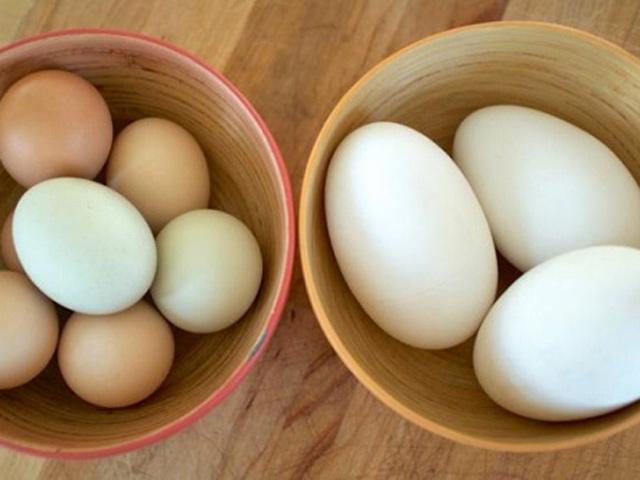 Ăn trứng ngỗng như thế nào để thai nhi thông minh?