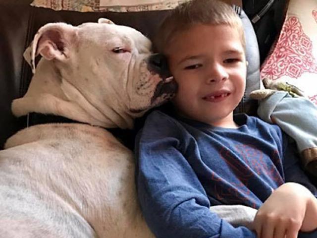 Tình bạn ngọt ngào, ai nghe cũng cảm động của cậu bé tự kỉ và chú chó bị điếc