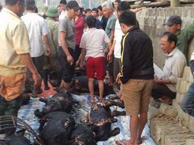 Đốt rác cháy lan cả trang trại, gần 70 con lợn bị thiêu đen, chủ hộ khóc ròng