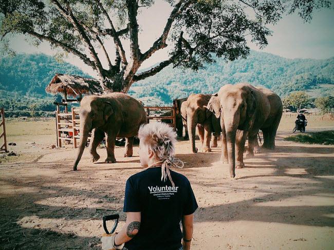 Tất cả tình nguyện viên được chia thành các nhóm nhỏ để tới thăm những nơi voi ở qua đêm. Nhiệm vụ hàng ngày của họ là giám sát đàn voi và tắm cho chúng. Ngoài ra, họ cũng phải chuẩn bị dưa hấu, chuối, bí ngô và đồ ăn khác có các con vật khổng lồ.