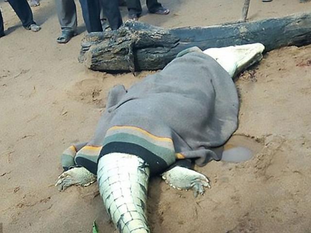 Tin tức 24h nổi bật: Hãi hùng phát hiện thi thể bé trai 8 tuổi khi mổ bụng cá sấu