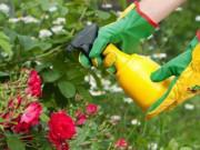 Nhà đẹp - 8 cách tự chế thuốc trừ sâu cực hiệu quả tại nhà để Tết tha hồ ăn rau sạch ngon