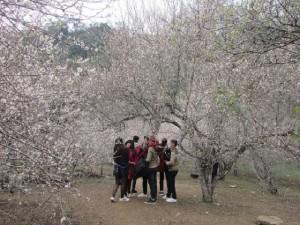 Lạc trôi vào rừng mơ trắng bồng bềnh trên cao nguyên Mộc Châu