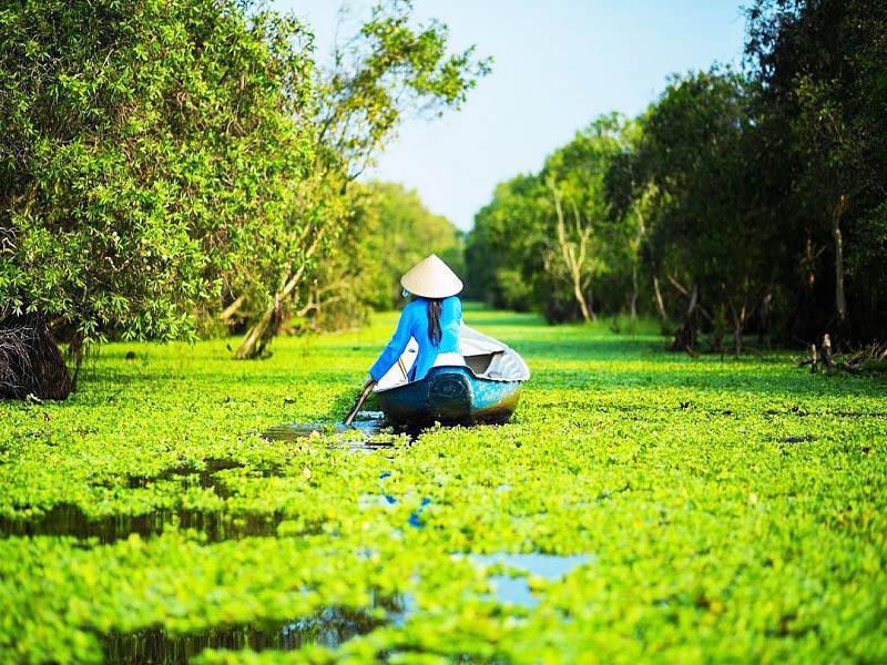 Rừng tràm Trà Sư - An Giang | Điểm du lịch có vẻ đẹp tuyệt tác
