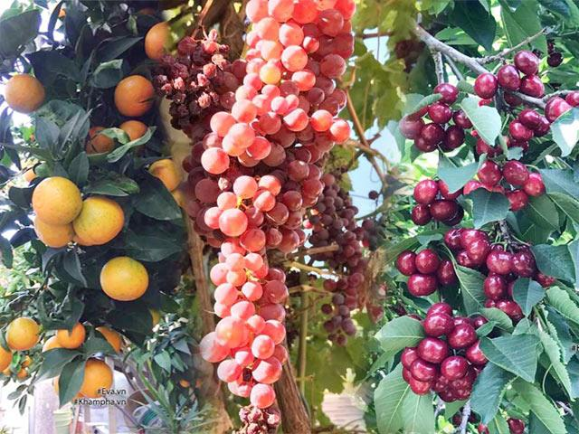 Khu vườn 300m² sai trĩu cherry, nho, cam,... đáng ngưỡng mộ của mẹ Việt ở Mỹ