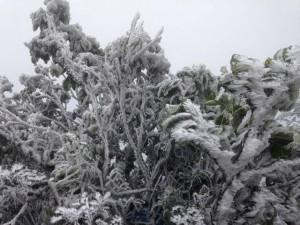 Lạnh -1,4 độ C, băng giá phủ trắng đỉnh Mẫu Sơn