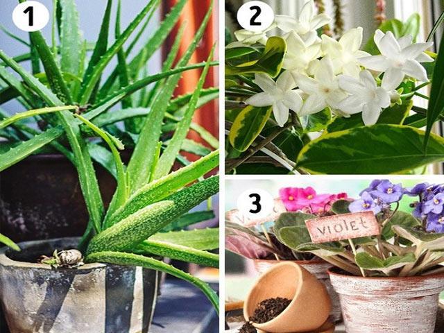 15 loại cây cảnh lọc bụi, lọc khí độc, bức xạ tốt nhất mà nhà nào cũng nên trồng