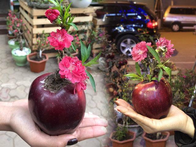 Độc đáo đào giâm táo nhỏ xinh, chơi được cả tháng lại có cây mới tha hồ trồng