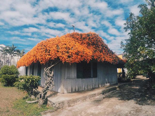Xuất hiện ngôi nhà phủ kín hoa xác pháo màu cam trên mái khiến dân tình rần rần muốn đến