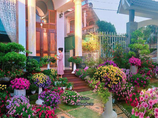 Ngẩn ngơ trước vườn hoa dạ yến thảo rực sắc trước sân nhà của bà mẹ xứ Huế mộng mơ