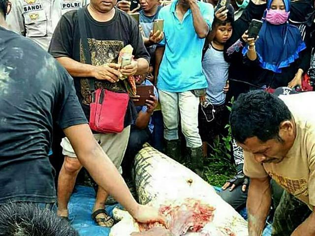 Mổ bụng cá sấu, tá hỏa phát hiện chân tay người bên trong