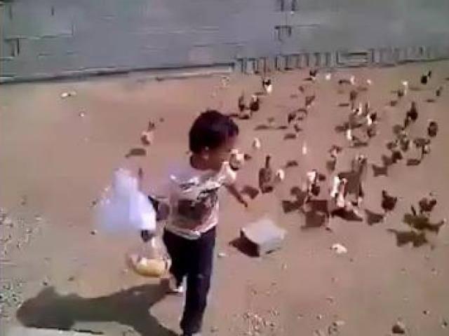 Cười tổng hợp: Những em bé dành cả tuổi thanh xuân để sợ gà