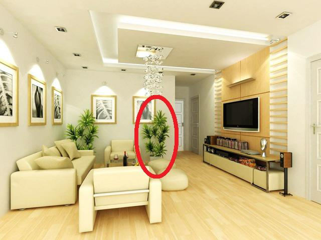 5 loại cây người nhà giàu không bao giờ bày trong nhà dù đẹp và sang đến đâu