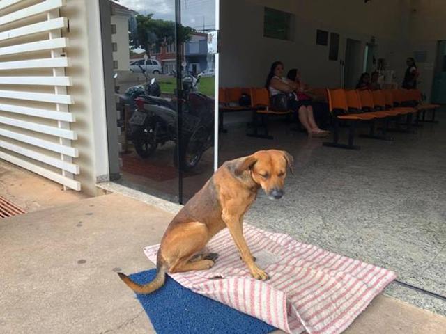 Chủ nhân qua đời 4 tháng, chú chó trung thành vẫn ngồi đợi trước cửa bệnh viện