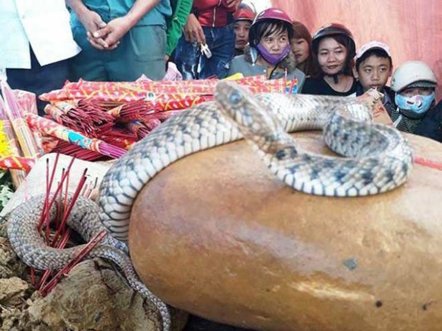Vụ mẹ con rắn nằm trên mộ của bà ăn mày: Dân tái căng lều bạt, tiếp tục cúng bái