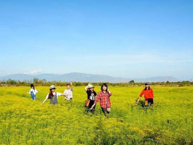 Bị giẫm đạp không thương tiếc, cánh đồng hoa thì là ở Ninh Thuận đóng cửa chỉ sau 4 ngày